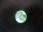 Dragonfly Buttons - Green / Gold - Small Size